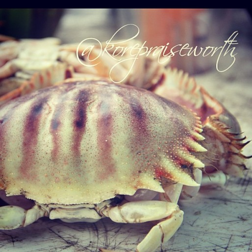 crabs beach KORE2